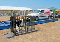 Пример использования весов Эльтон на выставке для определения веся теленка. фото #14